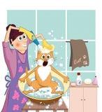 Banho de um gato vermelho Imagem de Stock