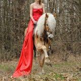Imagem colhida da mulher no vestido vermelho em um cavalo do haflinger Fotografia de Stock
