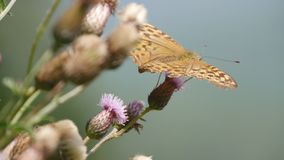 Imagem colorida bonita da borboleta da natureza selvagem na natureza fotos de stock