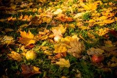 Imagem colorida do backround das folhas de outono caídas perfeitas para o uso sazonal Foto de Stock Royalty Free