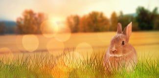 Imagem composta do close-up do coelhinho da Páscoa Fotografia de Stock Royalty Free