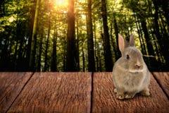 Imagem composta do close-up do coelhinho da Páscoa Imagens de Stock Royalty Free