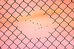Imagem conceptual dos pássaros que voam na forma de v no furo da cerca de fio de aço da malha imagem de stock