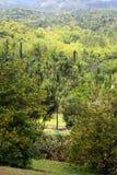 Imagem conservada em estoque da plantação de Croydon, Jamaica Fotografia de Stock