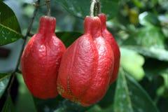 Imagem conservada em estoque da plantação de Croydon, Jamaica Foto de Stock Royalty Free