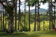 Imagem conservada em estoque da plantação de Croydon, Jamaica Fotos de Stock Royalty Free