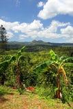 Imagem conservada em estoque da plantação de Croydon, Jamaica Foto de Stock