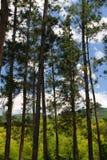 Imagem conservada em estoque da plantação de Croydon, Jamaica Imagens de Stock