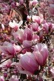Imagem conservada em estoque de Boston comum e jardim público, EUA Fotografia de Stock