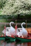 Imagem conservada em estoque de Boston comum e jardim público, EUA Fotos de Stock