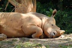 Imagem conservada em estoque do rinoceronte/rinoceronte fotografia de stock royalty free