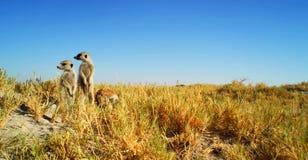 Imagem conservada em estoque dos animais selvagens em um parque nacional africano foto de stock