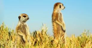 Imagem conservada em estoque dos animais selvagens em um parque nacional africano imagens de stock