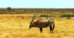 Imagem conservada em estoque dos animais selvagens em um parque nacional africano fotografia de stock royalty free