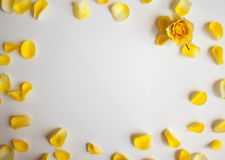 Imagem cor-de-rosa da natureza do amarelo petals foto de stock royalty free