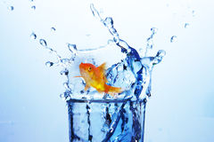 imagem 3D composta do peixe dourado contra o fundo branco Imagens de Stock