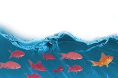 imagem 3D composta do peixe dourado contra o fundo branco Imagens de Stock Royalty Free