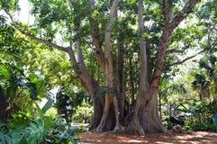Imagem da árvore Fotografia de Stock Royalty Free