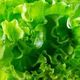 Imagem da alface como um fundo, close up, macro Foto de Stock Royalty Free