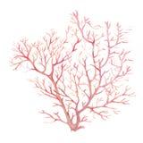 Imagem da aquarela de corais do mar em um fundo branco Fotografia de Stock Royalty Free