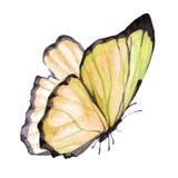 Imagem da aquarela de uma borboleta em um fundo branco Fotos de Stock