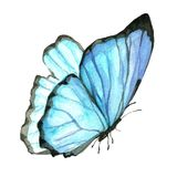 Imagem da aquarela de uma borboleta em um fundo branco Fotografia de Stock