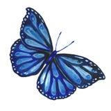 Imagem da aquarela de uma borboleta em um fundo branco Imagens de Stock Royalty Free