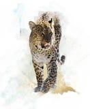 Imagem da aquarela do leopardo ilustração royalty free