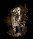 Imagem da aquarela do leopardo Fotografia de Stock Royalty Free