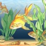 Imagem da aquarela da parte inferior de mar Imagens de Stock
