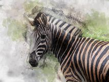 Imagem da aquarela da zebra no fundo brilhante ilustração royalty free