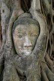 Imagem da cabeça da Buda em Wat Mahathat em Ayutthaya Fotografia de Stock