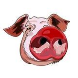 A imagem da cabeça de um porco, o símbolo do ano novo chinês, em um fundo isolado ilustração do vetor