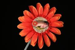 Imagem da fantasia do bebê infantil Fotos de Stock