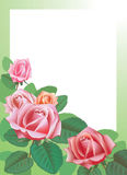 A imagem da flor imagens de stock royalty free