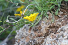 Imagem da flor Imagens de Stock Royalty Free