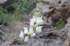 Imagem da flor Fotos de Stock Royalty Free