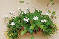 Imagem da flor imagens de stock