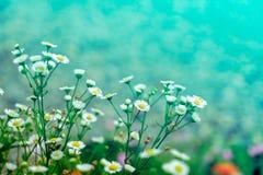 A imagem da flor colorida bonita no vintage pastel e no estilo retro com fundo do borrão Imagem de Stock Royalty Free