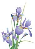 A imagem da flor no fundo branco Fotografia de Stock Royalty Free