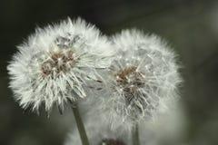 Imagem da flora e da fauna no macro imagens de stock royalty free