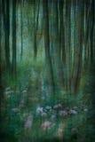 Imagem da floresta fotografia de stock royalty free