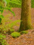 Imagem da foto de HDR das rochas, do tronco de árvore & das samambaias verticais Fotos de Stock Royalty Free
