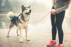 Imagem da moça que corre com seu cão, malamute do Alasca Fotografia de Stock Royalty Free
