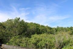 Imagem da natureza para Sugar Land Memorial Park e o corredor do Rio Brazos foto de stock royalty free