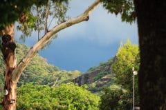 Imagem da paisagem da montanha no cume de Morelos em México Fotografia de Stock