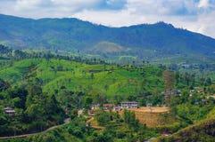 Imagem da paisagem de campos e de árvores de Sri Lanka, tonificada fotos de stock royalty free