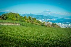 Imagem da paisagem do Mt Fuji com campo do chá verde no dia em Shizuoka, Japão imagens de stock