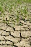 Imagem da terra seca Fotografia de Stock