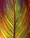 Imagem da textura da folha de uma flor Fotos de Stock Royalty Free